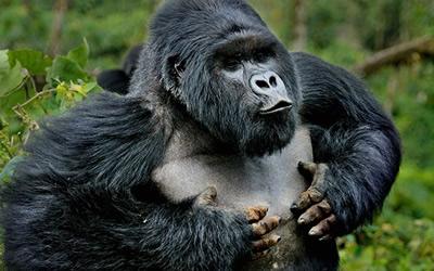 3 Days Visit Rwanda Gorillas