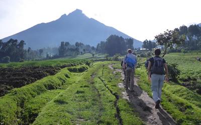 gorilla hiking rwanda